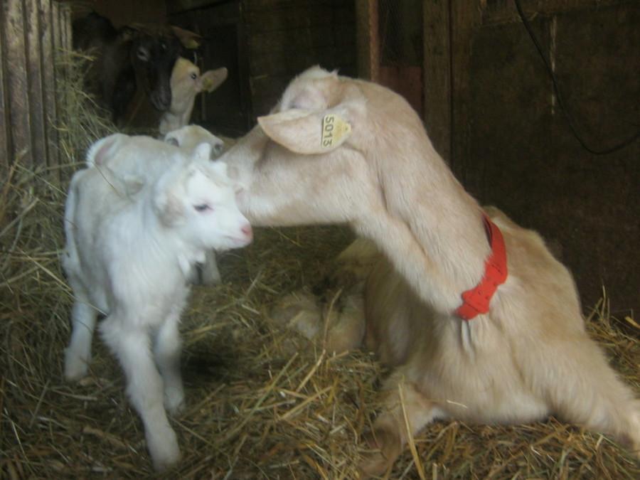 La ferme des rescapes animaux l 39 adoption - Images d animaux de la ferme ...