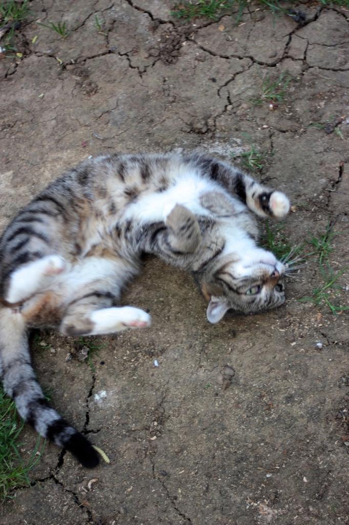 De même, si vous entendez parler de chats errants, sauvages, abandonnés par  des particuliers, informez,nous afin que nous puissions leur venir en aide.